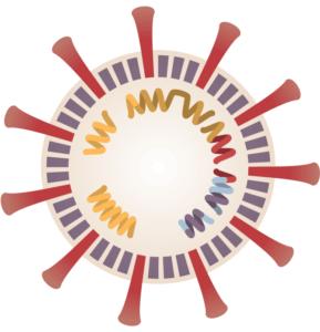 whole virus vaccine